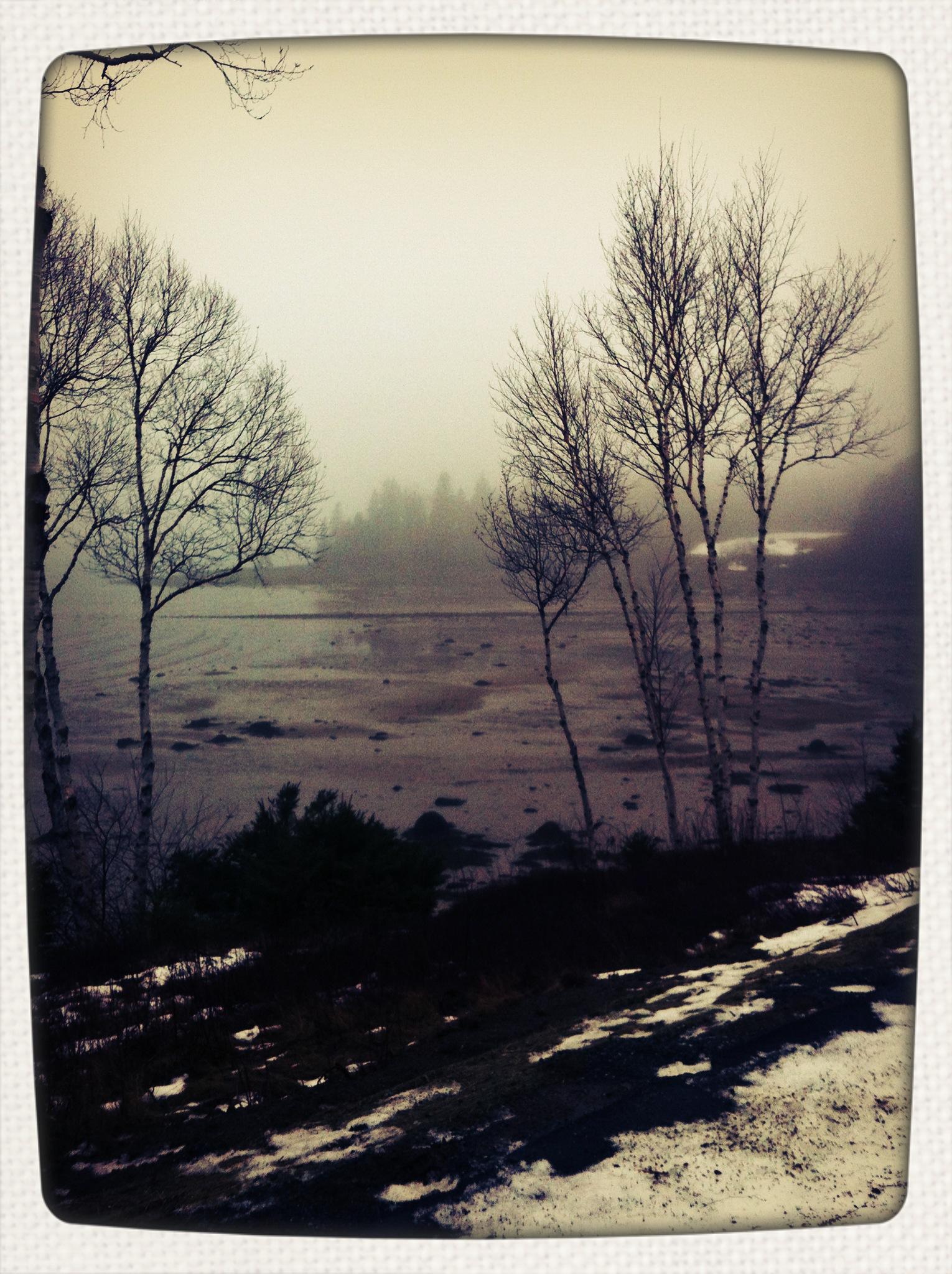 foggy january 7