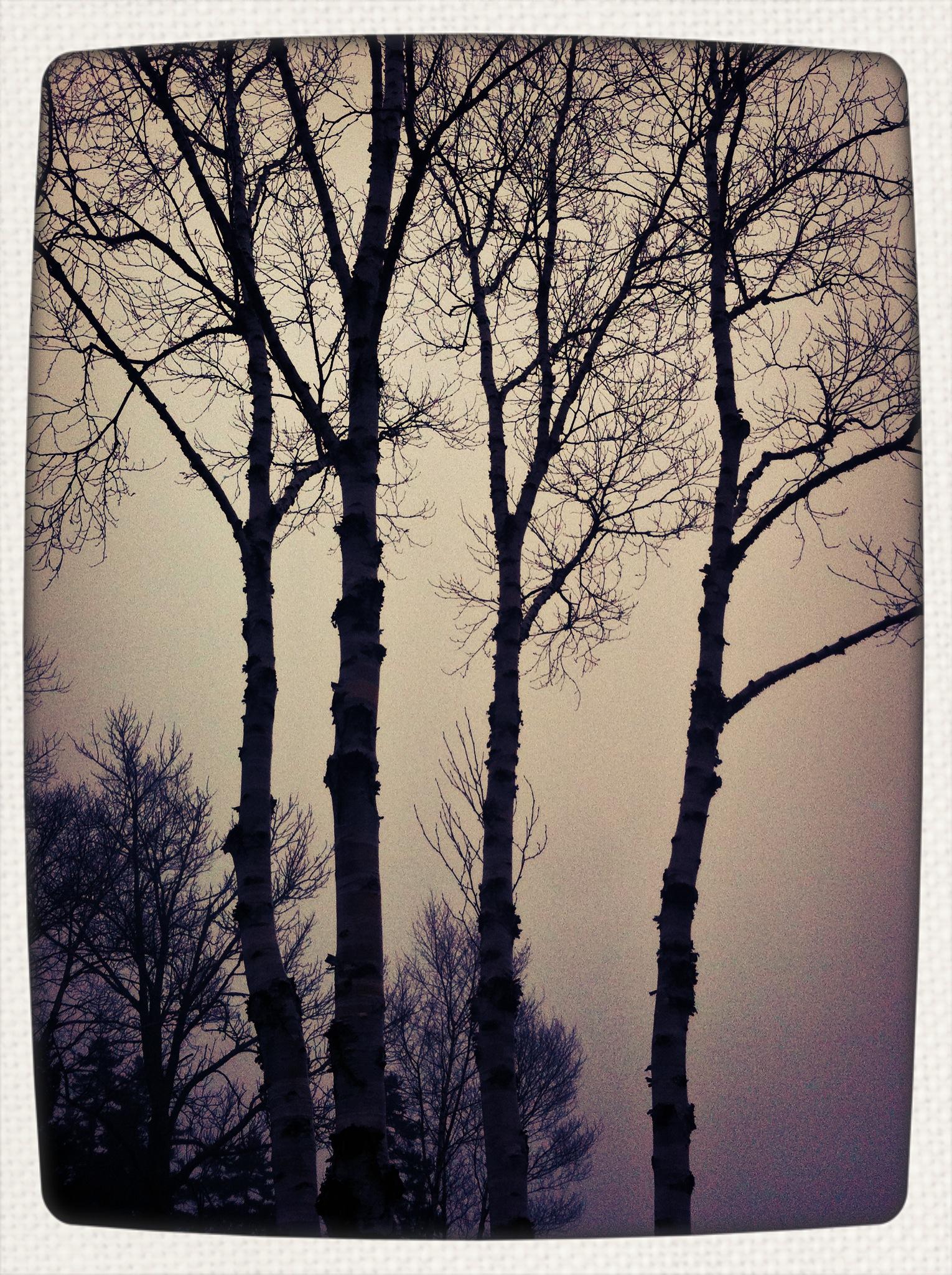foggy january 9