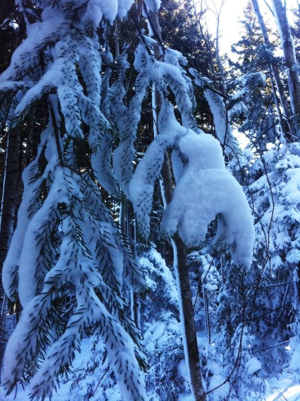 snowshoeing15