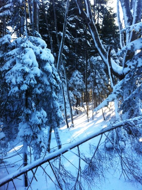 snowshoeing16