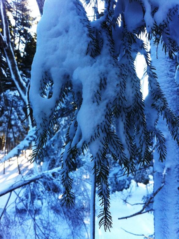 snowshoeing17