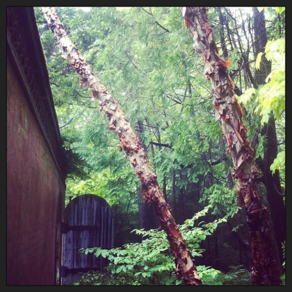 rockefeller gardens 1