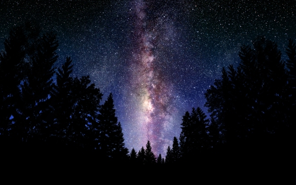 hansen-starry-sky-from-pine-trees