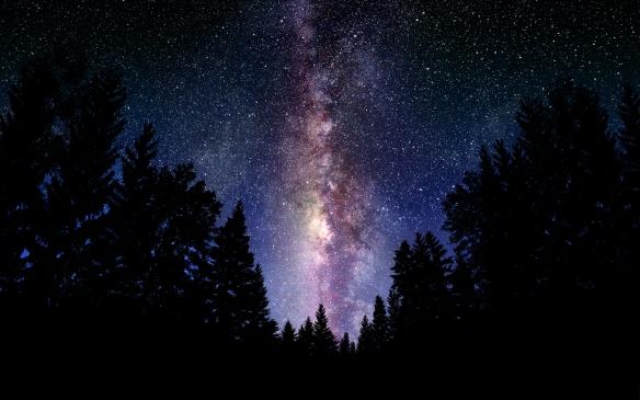 hansen-starry-sky-from-pine-trees
